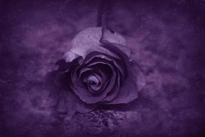 Photograph - Rose - Purple by Angie Tirado