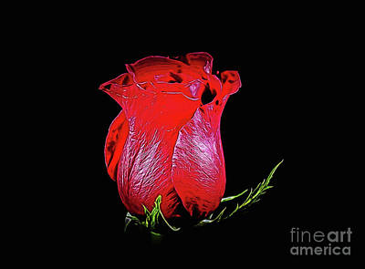 Photograph - Rose 1-3 by Ray Shrewsberry