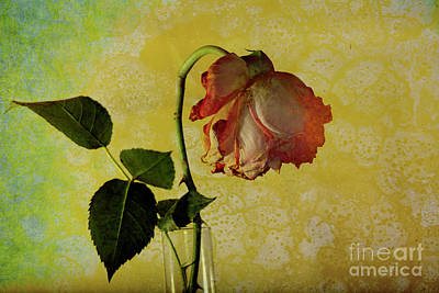 Photograph - Rose Flower In A Vase by Heiko Koehrer-Wagner