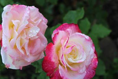 Photograph - Rose-11 by Anand Swaroop Manchiraju