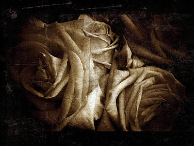 Photograph - Rose 11 by D A Metrov