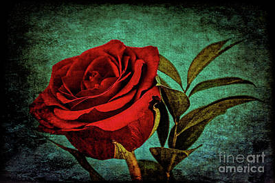 Photograph - Rose 121 by Ray Shrewsberry