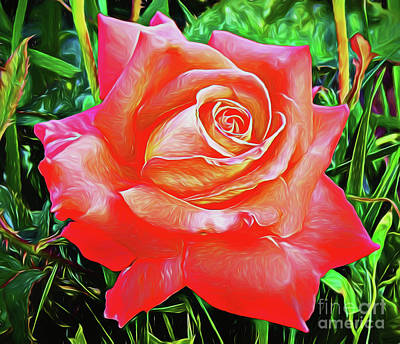 Photograph - Rose 16518 by Ray Shrewsberry