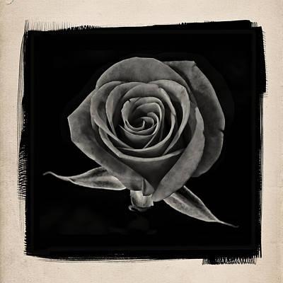 Antique Photograph - Rose 2 B by Patrick Chuprina