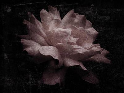 Photograph - Rose 2 by D A Metrov
