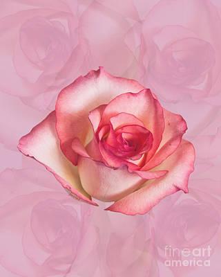 Kim Digital Art - Yes Love Rose M20 by Johannes Murat