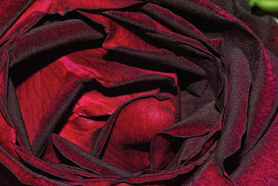 Photograph - Rose 3 by Isam Awad