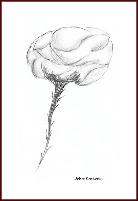 Drawing - Rose 3 by John Krakora