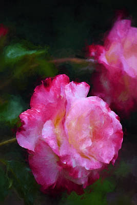 Photograph - Rose 355 by Pamela Cooper