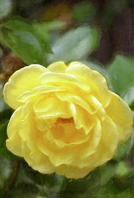 Photograph - Rose 366 by Pamela Cooper