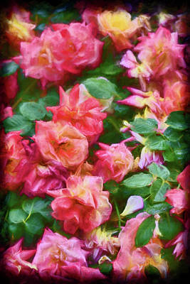 Photograph - Rose 367 by Pamela Cooper