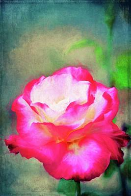 Photograph - Rose 368 by Pamela Cooper