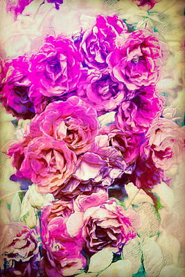 Photograph - Rose 388 by Pamela Cooper