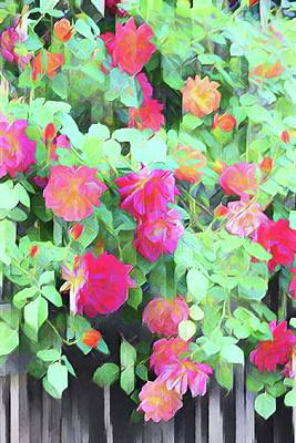 Photograph - Rose 390 by Pamela Cooper
