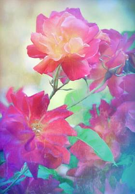 Photograph - Rose 391 by Pamela Cooper
