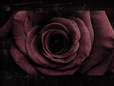 Photograph - Rose 5 by D A Metrov