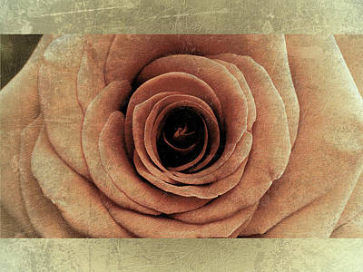 Photograph - Rose 6 by D A Metrov