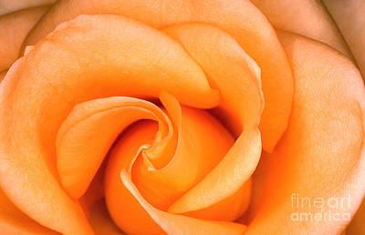 Rose 6 Art Print by Rich Killion