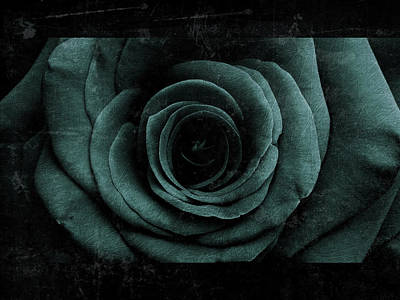 Photograph - Rose 7 by D A Metrov