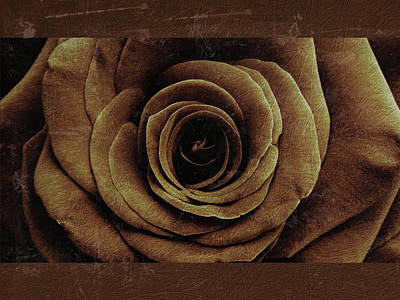 Photograph - Rose 8 by D A Metrov