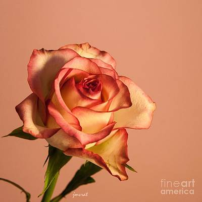Kim Digital Art - Extraordinary Rose M8 by Johannes Murat