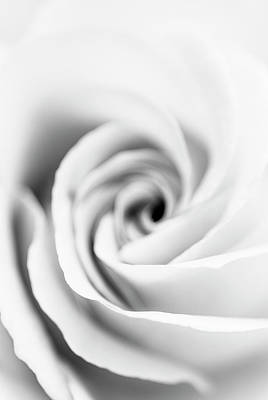 Photograph - Rose Abstract In Black And White by Vishwanath Bhat