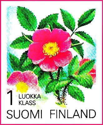 Rose Acicularis Art Print