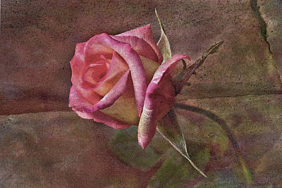 Rose Aged Beauty Original