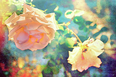 Photograph - Rose Aglow With Summer Sun by Kay Brewer