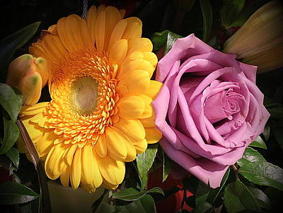 Photograph - Rose And Daisy In Full Bloom by Dora Sofia Caputo Photographic Art and Design