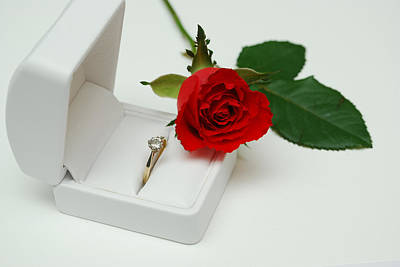 Rose And Diamond Ring Original by Terence Davis