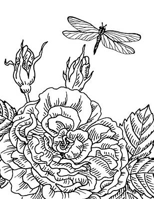 Drawing - Rose And Dragonfly Drawing  by Irina Sztukowski