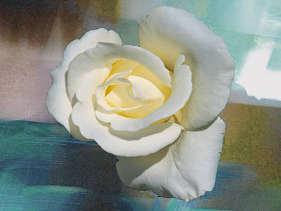 Photograph - Rose And Lights by Helen Haw