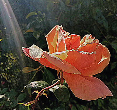Photograph - Rose And Rays by Suzy Piatt