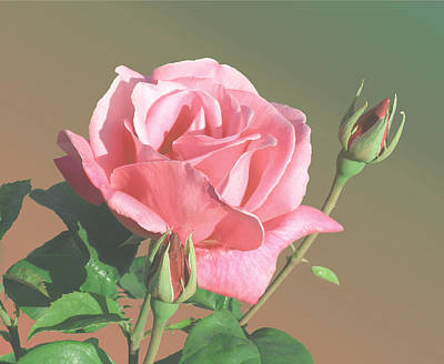 Rose And Two Buds Art Print by Wilbur Young