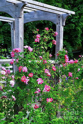 Photograph - Rose Arbor by Verena Matthew