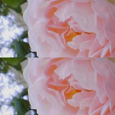 Er Photograph - #rose #art #abstract #flowers by Miwa Nishikawa