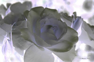 Photograph - Rose Art by Milena Ilieva