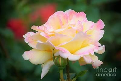 Rose Beauty Art Print