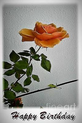 Photograph - The Birthday Rose by Val Byrne