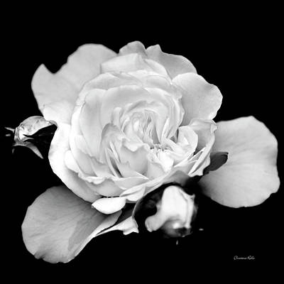 Photograph - Rose Black And White by Christina Rollo