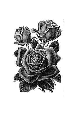Art Print featuring the digital art Rose Black by ReInVintaged