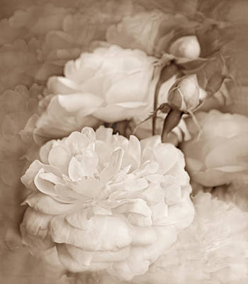 Photograph - Rose Bouquet Flowers Soft Brown by Jennie Marie Schell