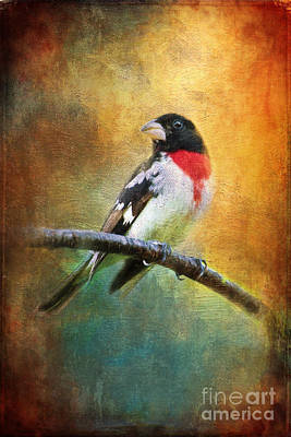 Photograph - Rose-breasted Grosbeak by Christina VanGinkel