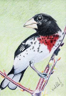 Painting - Rose Breasted Grosbeak by Wade Clark