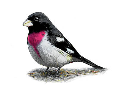Digital Art - Rose Breasted Grosbeak by Yuichi Tanabe