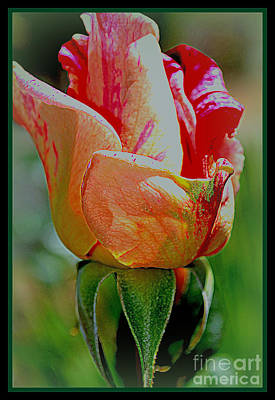 Photograph - Rose Bud by Diane montana Jansson