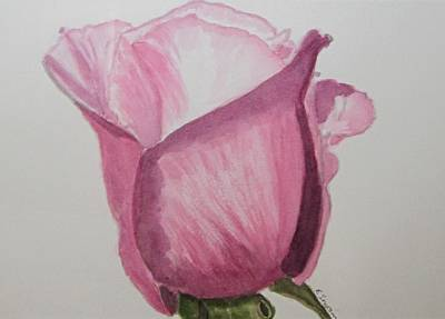 Rose Bud Art Print by Elvira Ingram