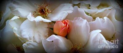 Photograph - Rose Bud by Kevin Bohner