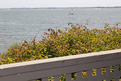 Photograph - Rose Bush In Front Of The Bay by Amazing Photographs AKA Christian Wilson